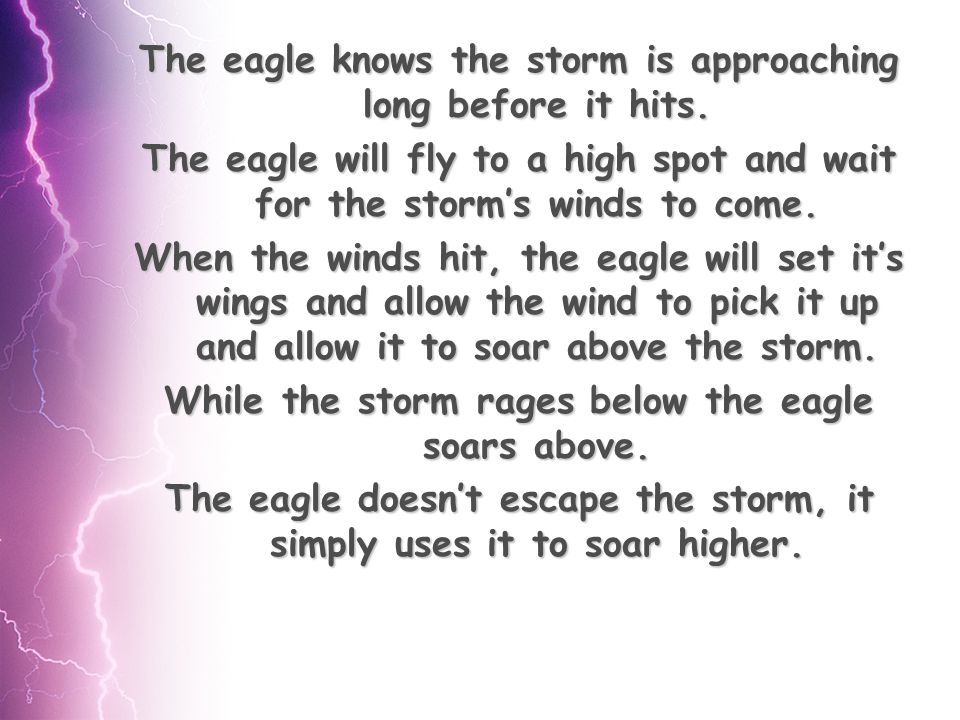 The eagle knows the storm is approaching long before it hits.