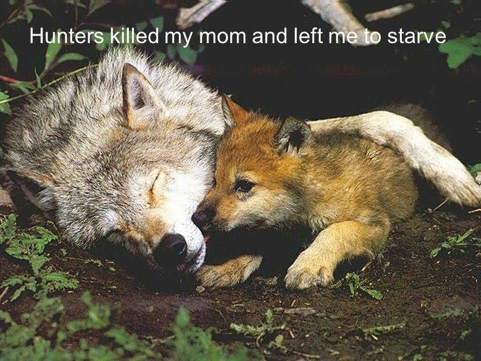 Hunters killed my mom and left me to starve
