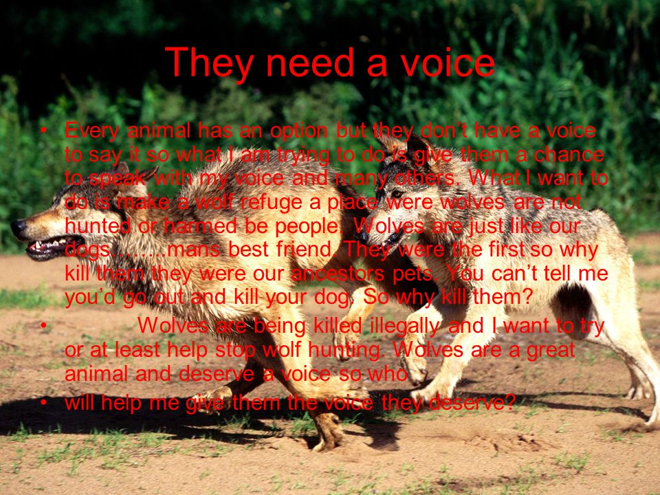 They need a voice Every animal has an option but they don't have a voice to say it so what I am trying to do is give them a chance to speak with my voice and many others.