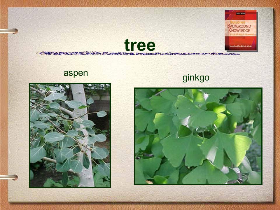 tree aspen ginkgo