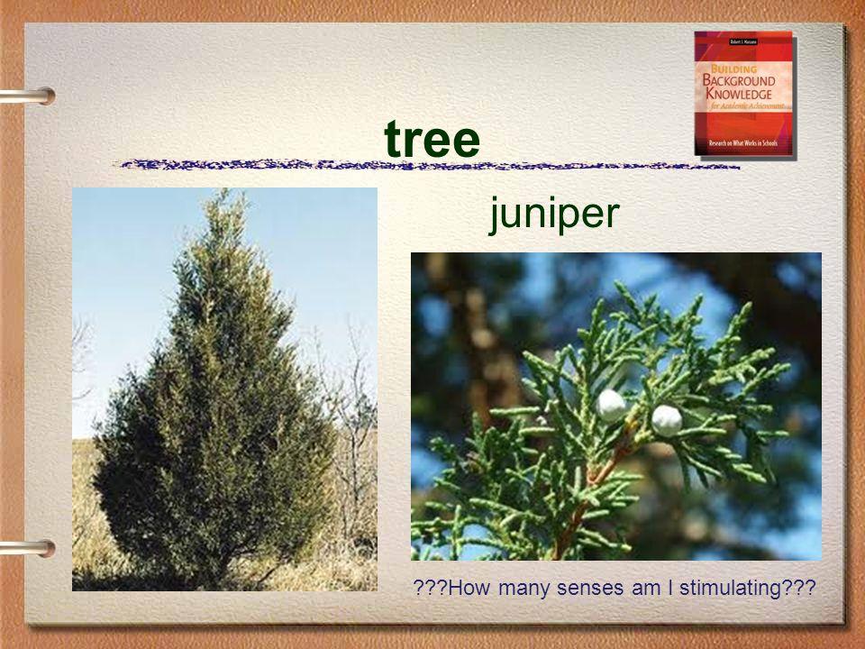 tree juniper ???How many senses am I stimulating???