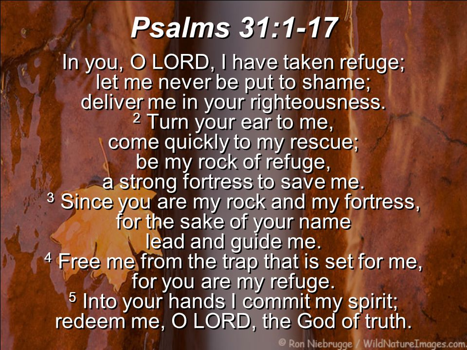 Psalms 31:1-17 In you, O LORD, I have taken refuge; let me never be put to shame; deliver me in your righteousness.