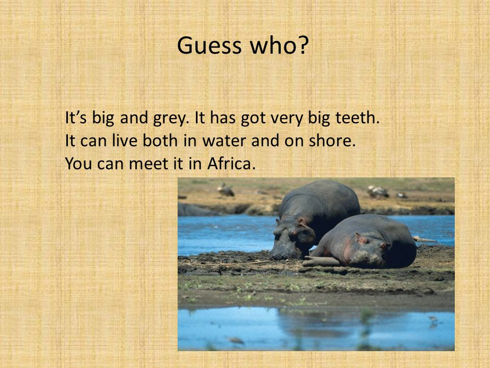 Guess who. It's big and grey. It has got very big teeth.