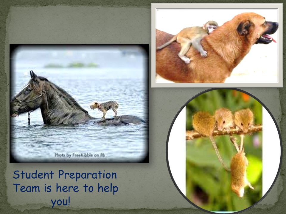 Student Preparation Team is here to help you!