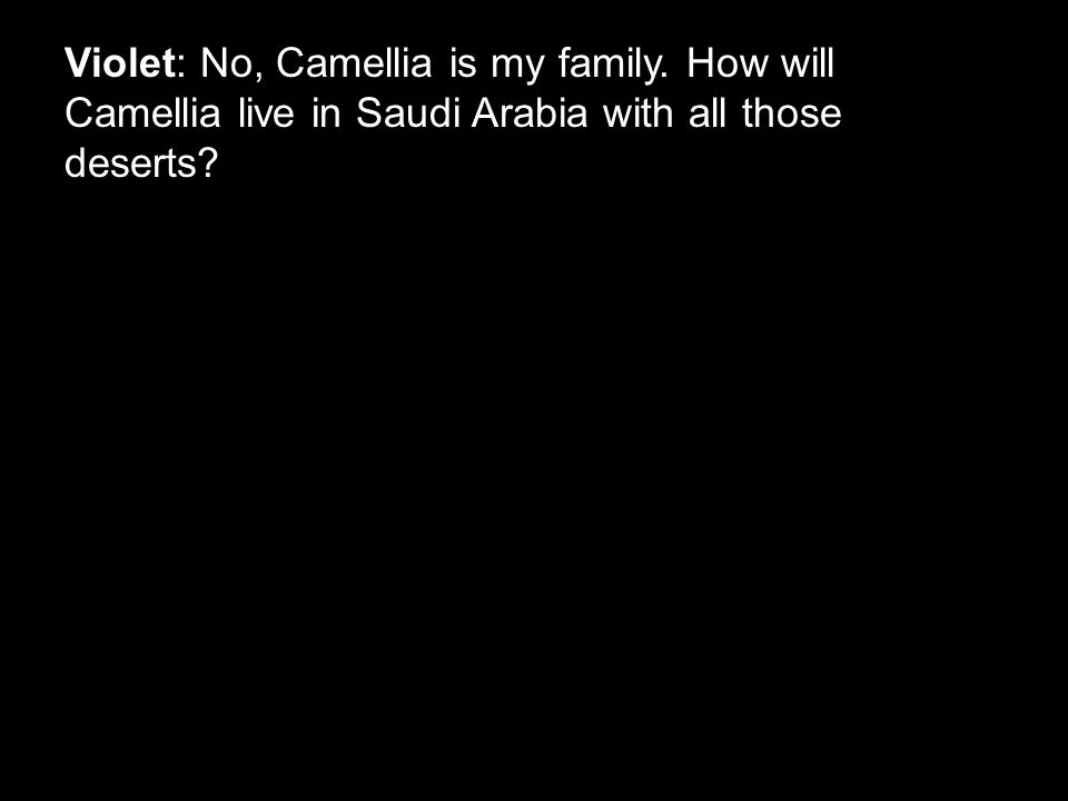 Violet: No, Camellia is my family. How will Camellia live in Saudi Arabia with all those deserts?