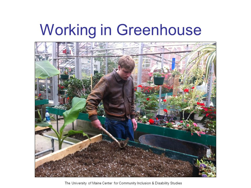 The University of Maine Center for Community Inclusion & Disability Studies Working in Greenhouse