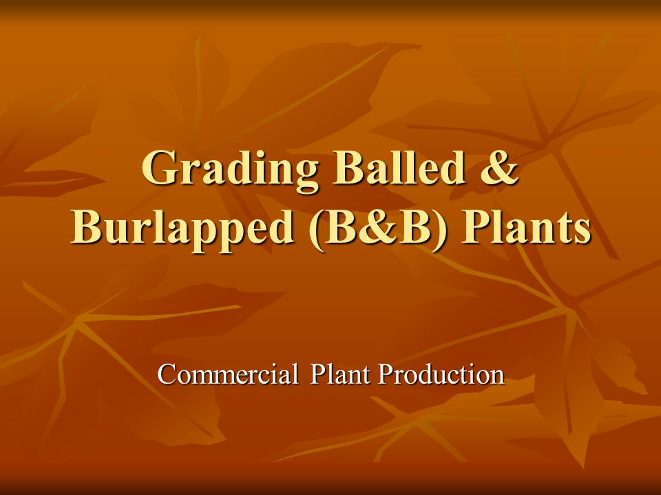 Grading Balled & Burlapped (B&B) Plants Commercial Plant Production