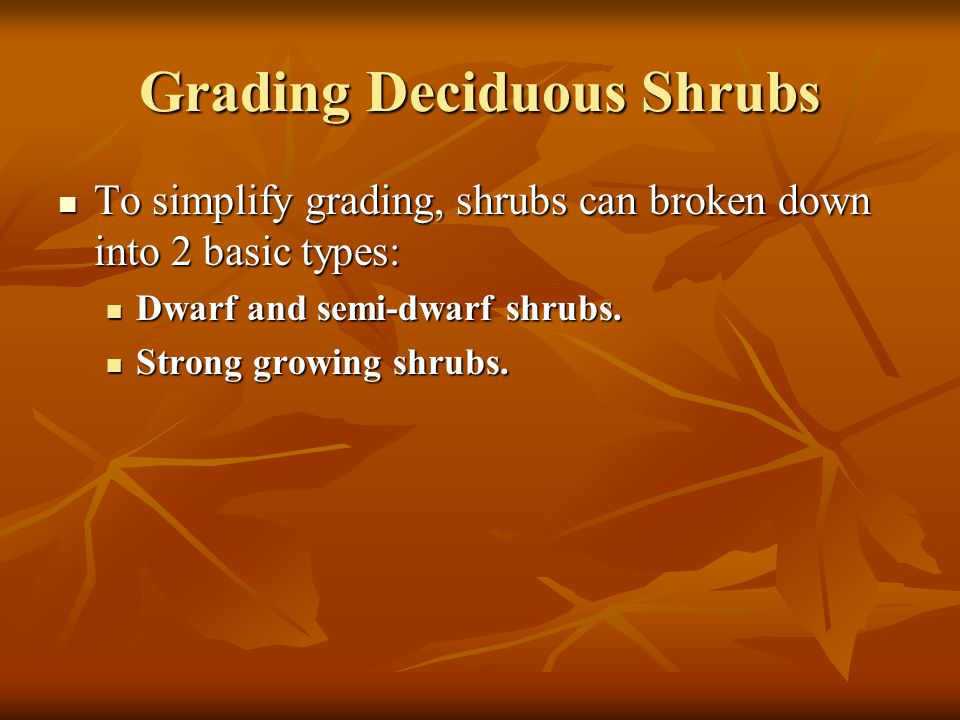 Grading Deciduous Shrubs To simplify grading, shrubs can broken down into 2 basic types: To simplify grading, shrubs can broken down into 2 basic types: Dwarf and semi-dwarf shrubs.