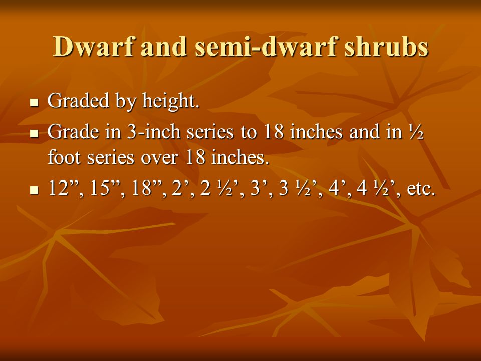 Dwarf and semi-dwarf shrubs Graded by height. Graded by height.
