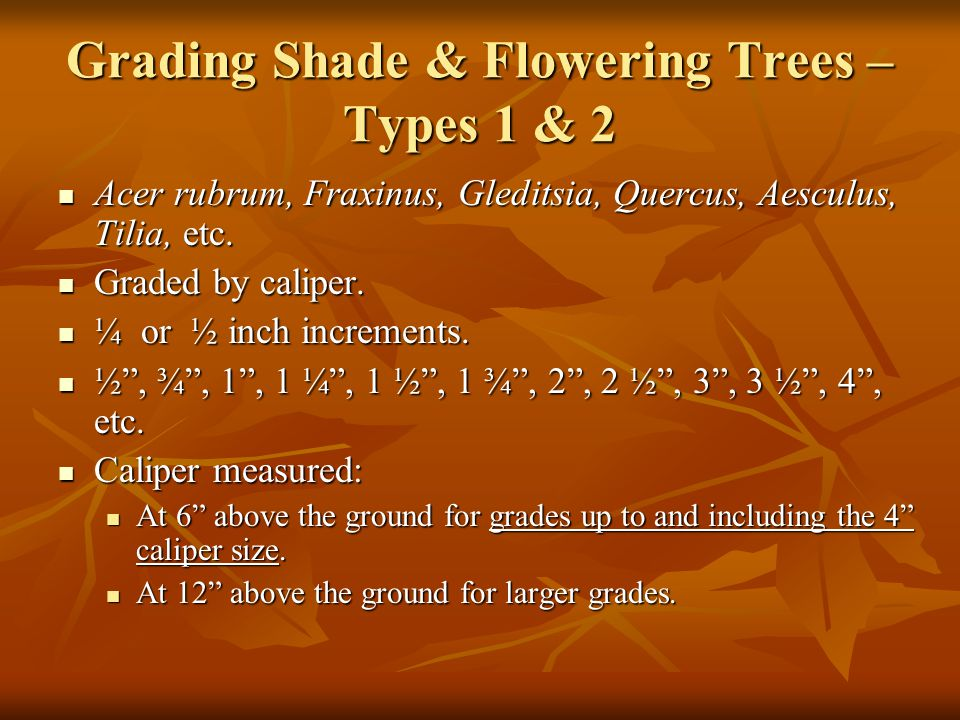 Grading Shade & Flowering Trees – Types 1 & 2 Acer rubrum, Fraxinus, Gleditsia, Quercus, Aesculus, Tilia, etc. Acer rubrum, Fraxinus, Gleditsia, Querc