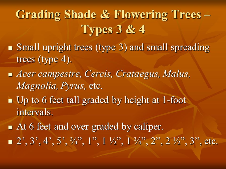 Grading Shade & Flowering Trees – Types 3 & 4 Small upright trees (type 3) and small spreading trees (type 4).