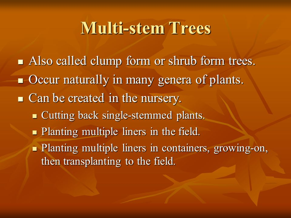 Multi-stem Trees Also called clump form or shrub form trees.