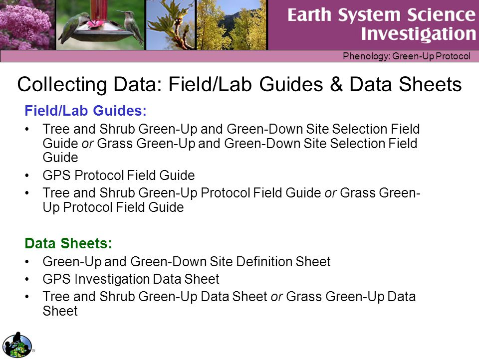 Phenology: Green-Up Protocol Collecting Data: Field/Lab Guides & Data Sheets Field/Lab Guides: Tree and Shrub Green-Up and Green-Down Site Selection F