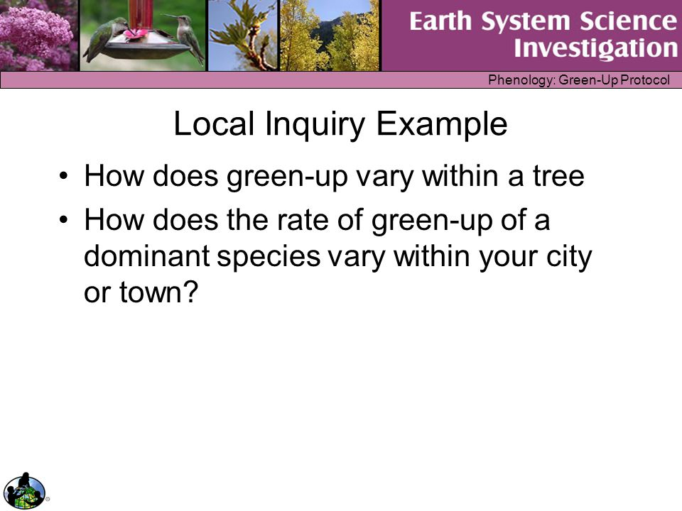 Phenology: Green-Up Protocol Local Inquiry Example How does green-up vary within a tree How does the rate of green-up of a dominant species vary withi