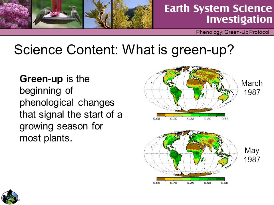 Phenology: Green-Up Protocol Science Content: What is green-up? Green-up is the beginning of phenological changes that signal the start of a growing s