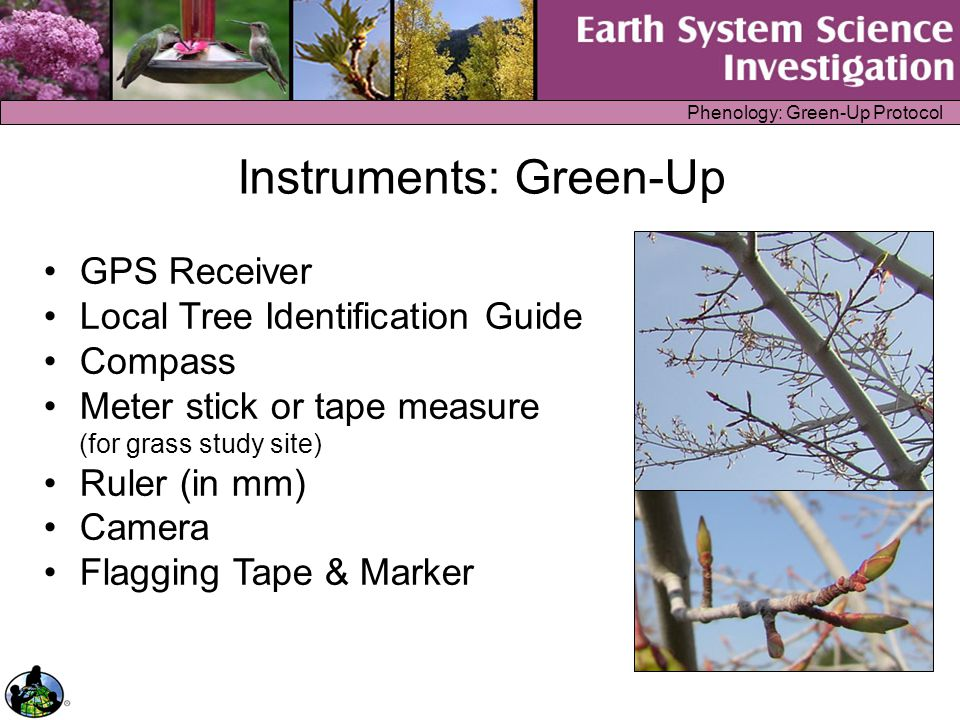 Phenology: Green-Up Protocol Instruments: Green-Up GPS Receiver Local Tree Identification Guide Compass Meter stick or tape measure (for grass study s