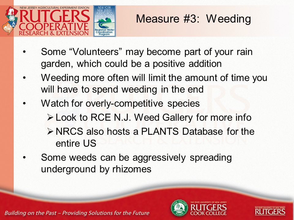 Measure #3: Weeding Some Volunteers may become part of your rain garden, which could be a positive addition Weeding more often will limit the amount of time you will have to spend weeding in the end Watch for overly-competitive species  Look to RCE N.J.