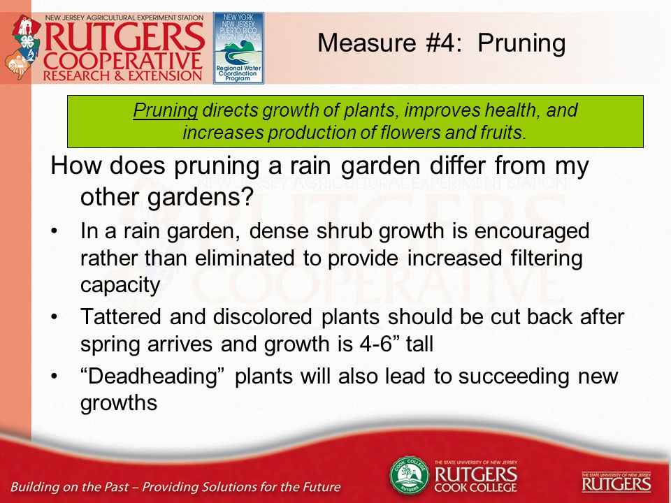 Types of Pruning THINNING = basically, thinning out.