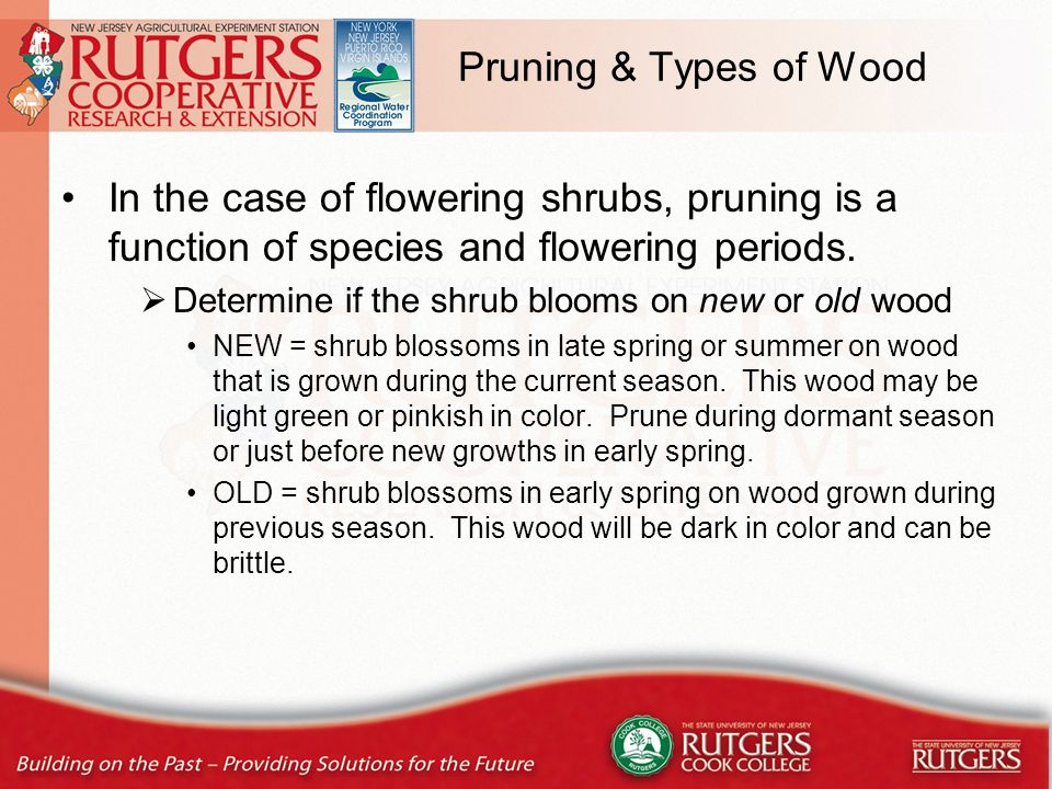 Measure #5: Mowing After the growing season, it will not be necessary to remove stems and seedheads.