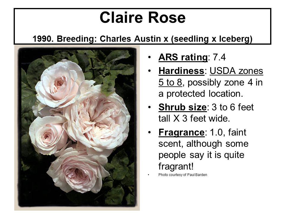 Claire Rose 1990.