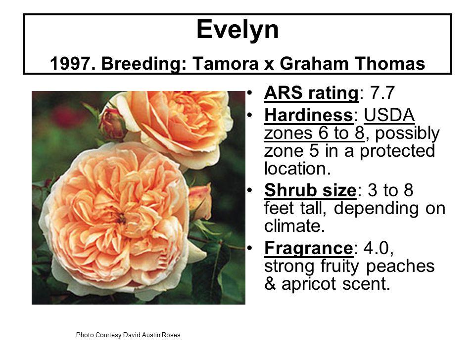 Evelyn 1997.