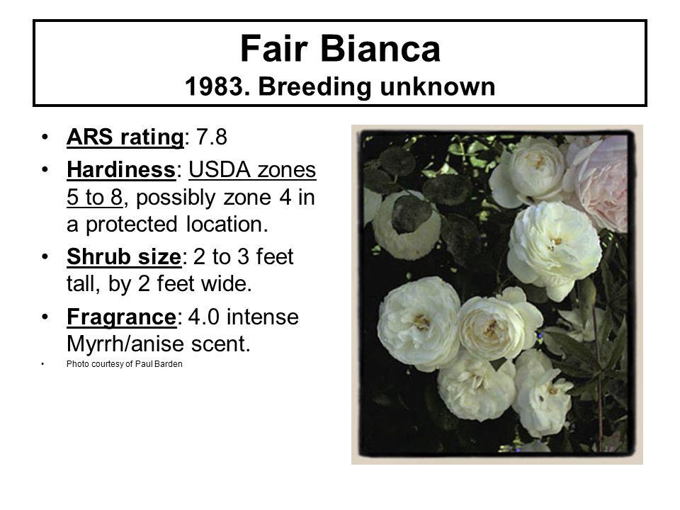 Fair Bianca 1983.
