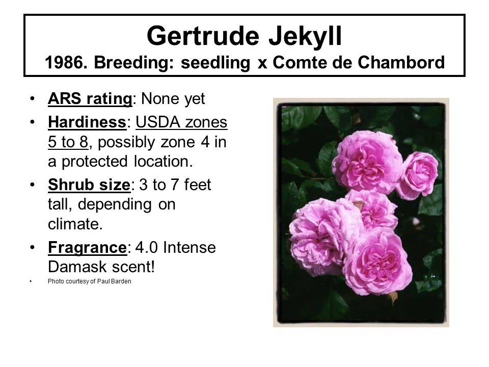 Gertrude Jekyll 1986.