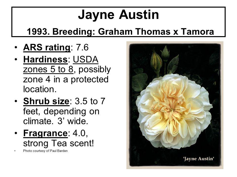 Jayne Austin 1993.