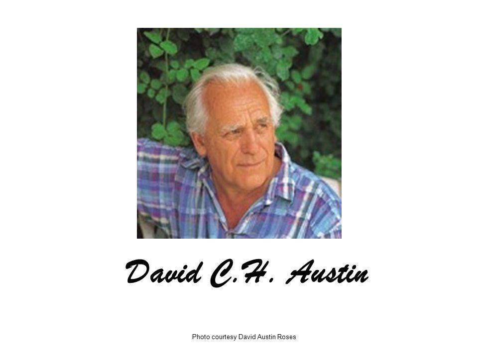 David C.H. Austin Photo courtesy David Austin Roses