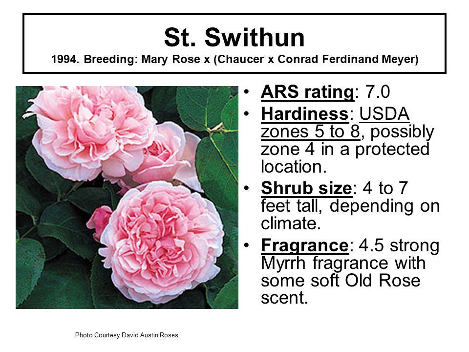 St. Swithun 1994.