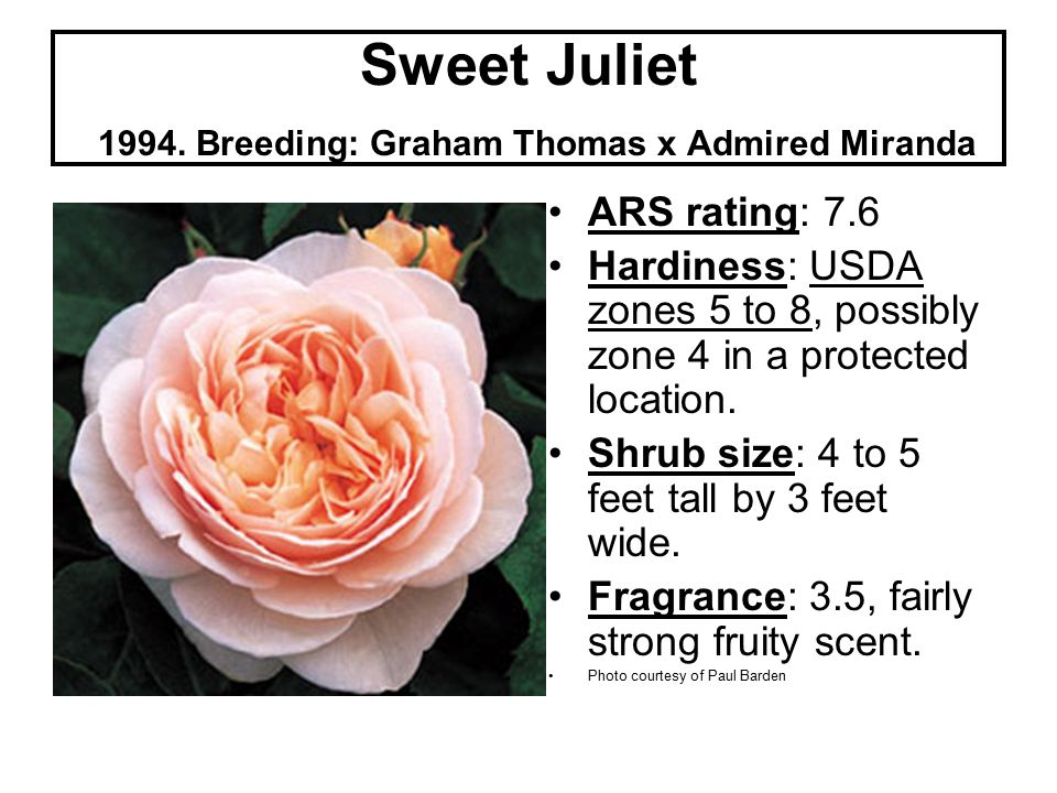 Sweet Juliet 1994.