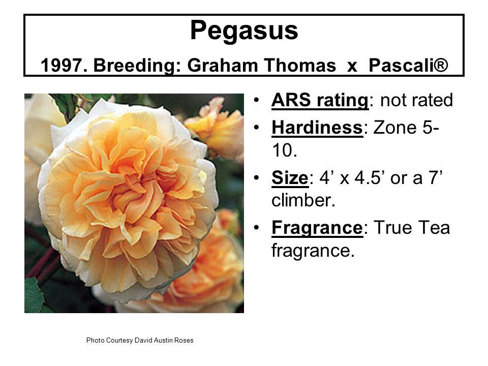 Pegasus 1997. Breeding: Graham Thomas x Pascali® ARS rating: not rated Hardiness: Zone 5- 10.