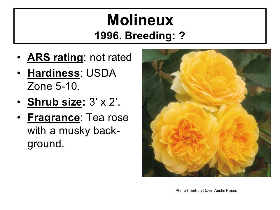 Molineux 1996. Breeding: . ARS rating: not rated Hardiness: USDA Zone 5-10.
