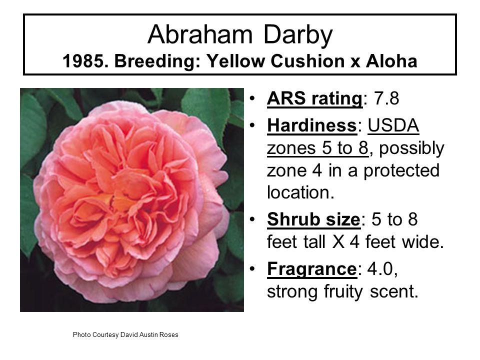 Abraham Darby 1985.