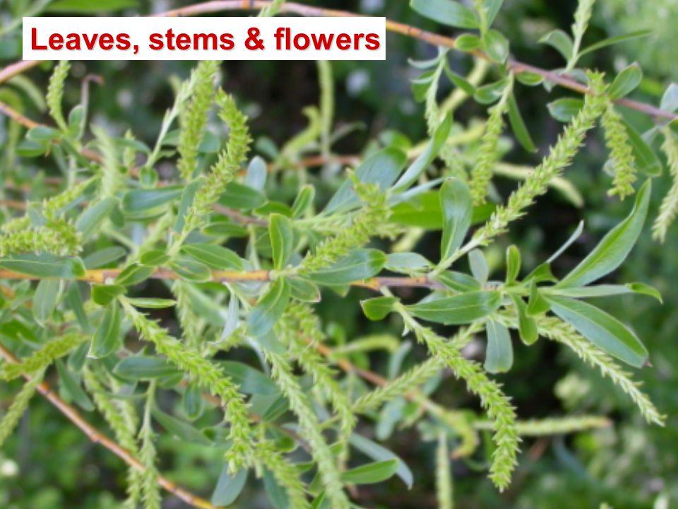 Leaves, stems & flowers
