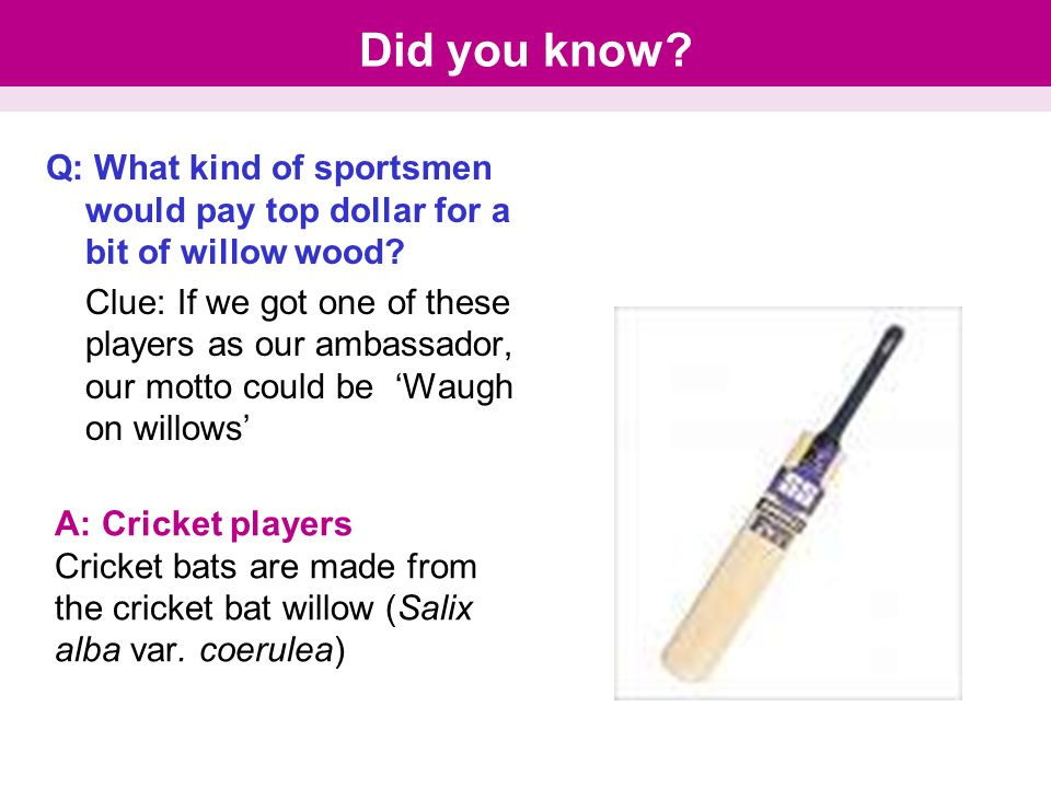 Did you know. Q: What kind of sportsmen would pay top dollar for a bit of willow wood.