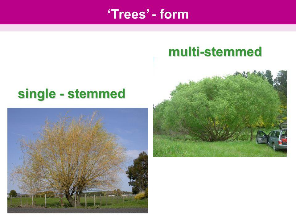 single - stemmed multi-stemmed 'Trees' - form