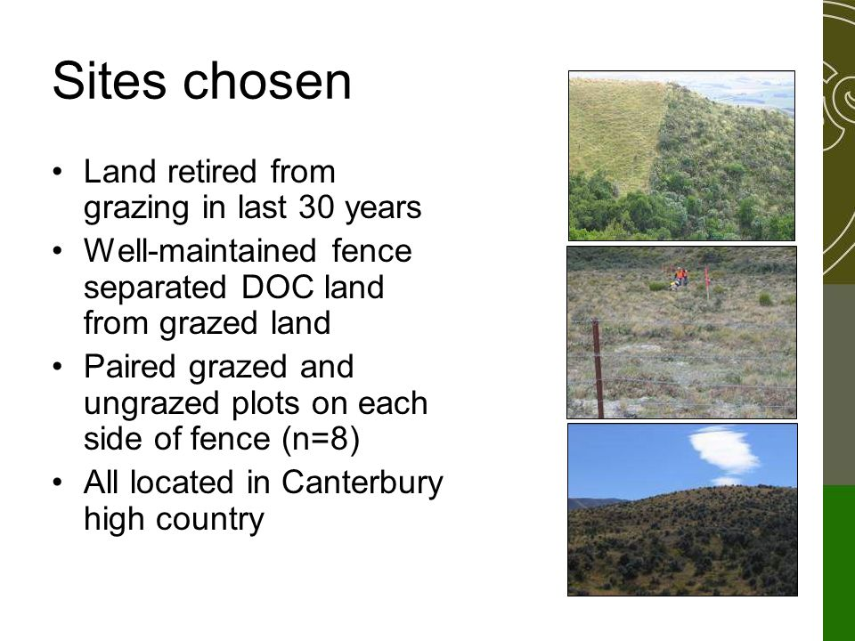 Sites chosen Land retired from grazing in last 30 years Well-maintained fence separated DOC land from grazed land Paired grazed and ungrazed plots on each side of fence (n=8) All located in Canterbury high country