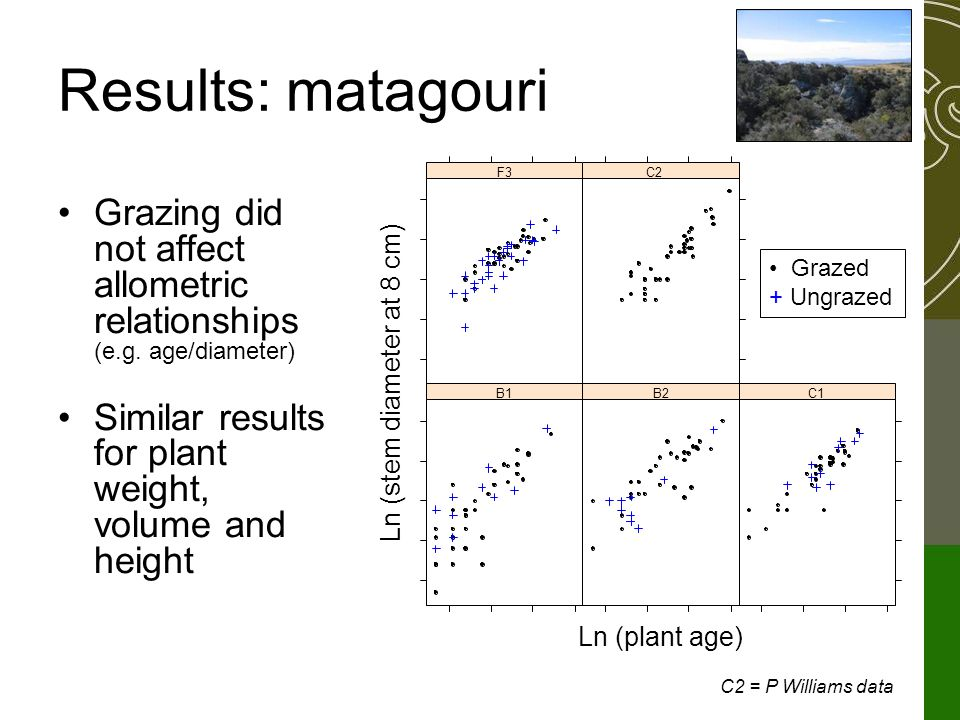 Results: matagouri Grazing did not affect allometric relationships (e.g.