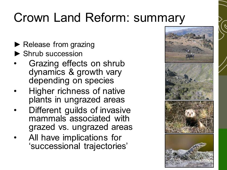 Crown Land Reform: summary ► Release from grazing ► Shrub succession Grazing effects on shrub dynamics & growth vary depending on species Higher richness of native plants in ungrazed areas Different guilds of invasive mammals associated with grazed vs.