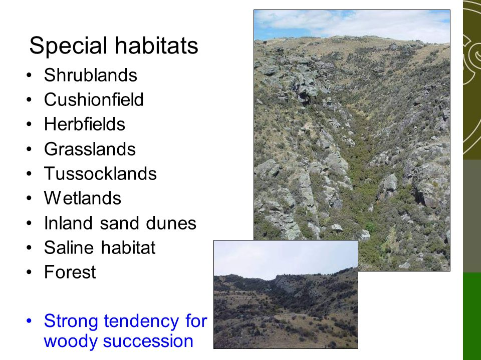 Special habitats Shrublands Cushionfield Herbfields Grasslands Tussocklands Wetlands Inland sand dunes Saline habitat Forest Strong tendency for woody succession