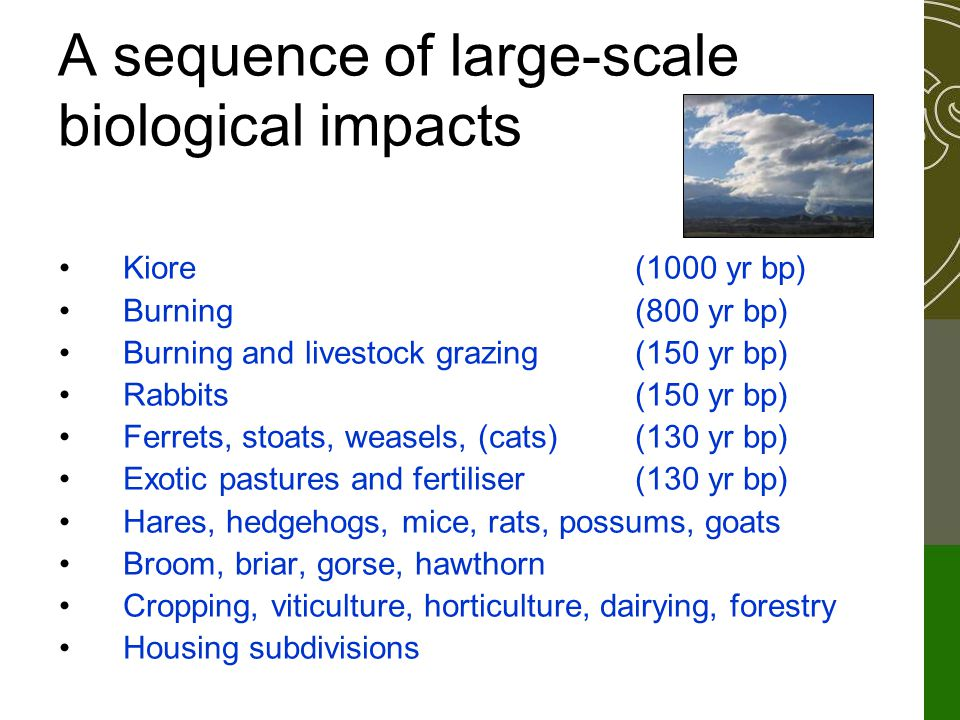 A sequence of large-scale biological impacts Kiore(1000 yr bp) Burning(800 yr bp) Burning and livestock grazing(150 yr bp) Rabbits(150 yr bp) Ferrets, stoats, weasels, (cats)(130 yr bp) Exotic pastures and fertiliser(130 yr bp) Hares, hedgehogs, mice, rats, possums, goats Broom, briar, gorse, hawthorn Cropping, viticulture, horticulture, dairying, forestry Housing subdivisions