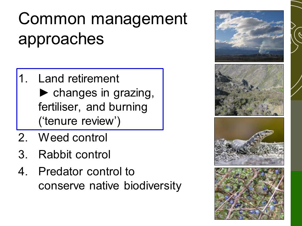 Common management approaches 1.Land retirement ► changes in grazing, fertiliser, and burning ('tenure review') 2.Weed control 3.Rabbit control 4.Predator control to conserve native biodiversity