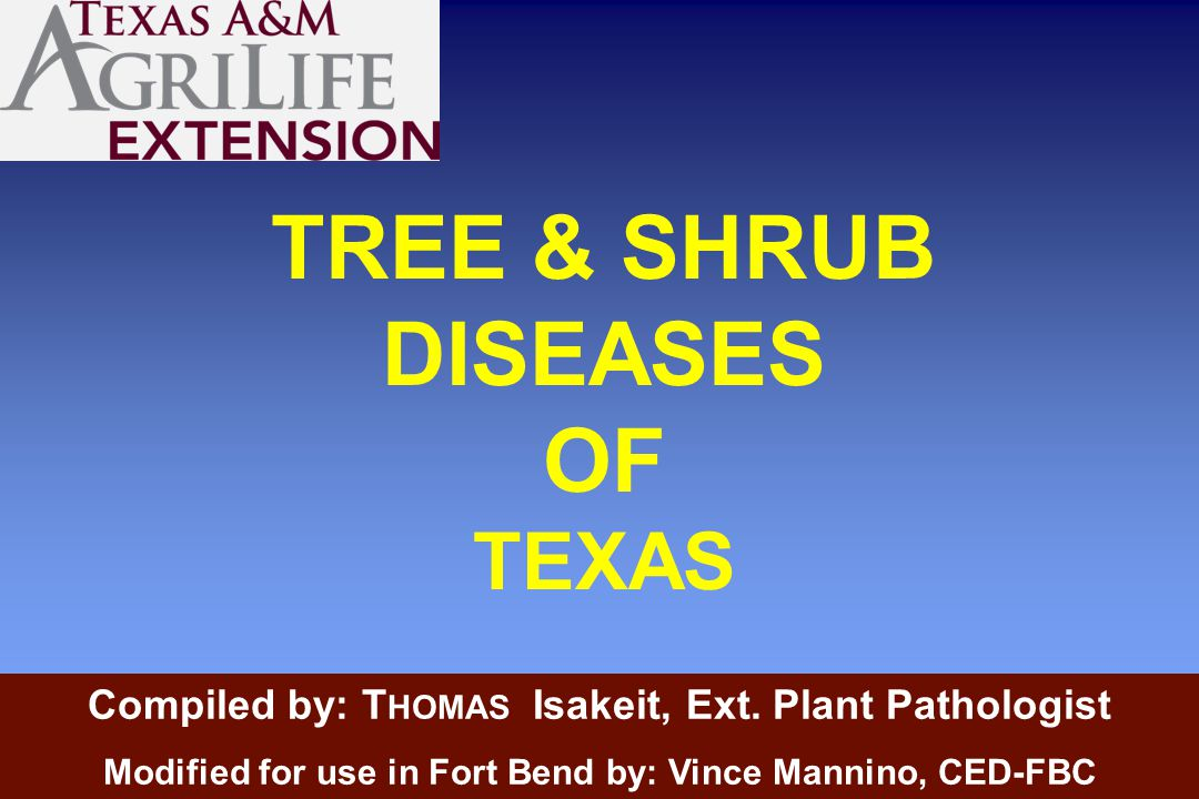 TREE & SHRUB DISEASES OF TEXAS Compiled by: T HOMAS Isakeit, Ext.