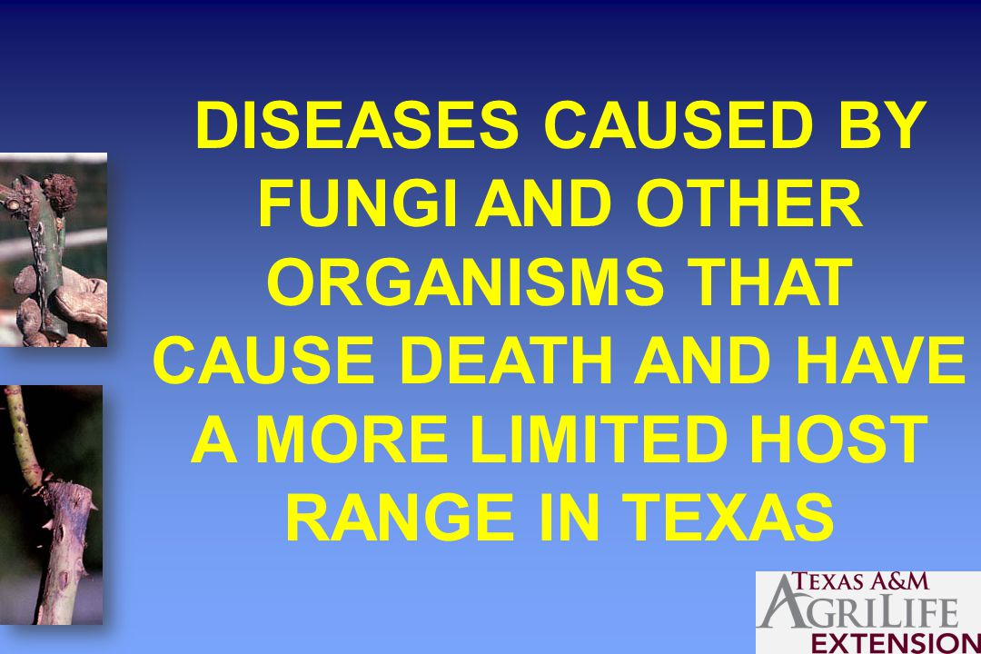DISEASES CAUSED BY FUNGI AND OTHER ORGANISMS THAT CAUSE DEATH AND HAVE A MORE LIMITED HOST RANGE IN TEXAS