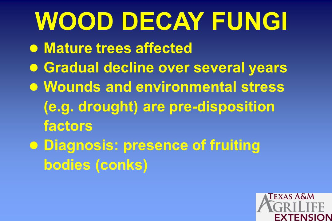 WOOD DECAY FUNGI Mature trees affected Gradual decline over several years Wounds and environmental stress (e.g.