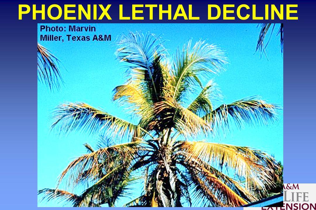 PHOENIX LETHAL DECLINE