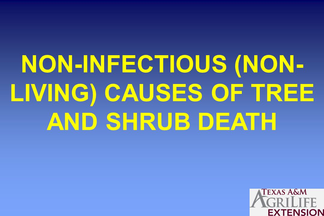 NON-INFECTIOUS (NON- LIVING) CAUSES OF TREE AND SHRUB DEATH