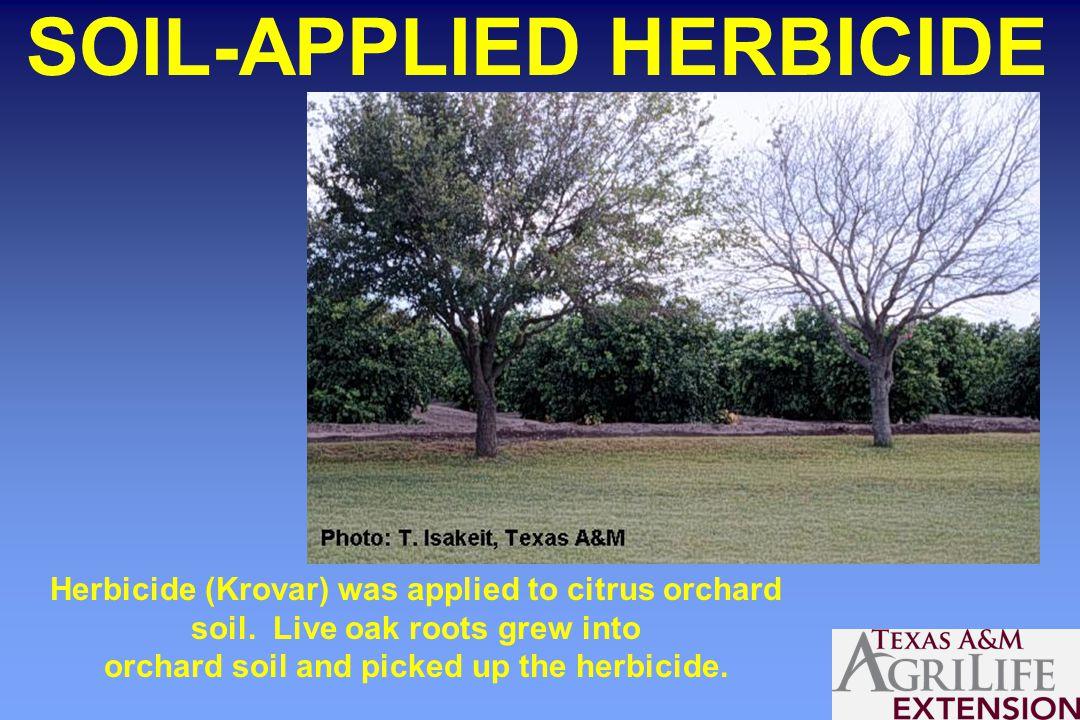 SOIL-APPLIED HERBICIDE Herbicide (Krovar) was applied to citrus orchard soil.