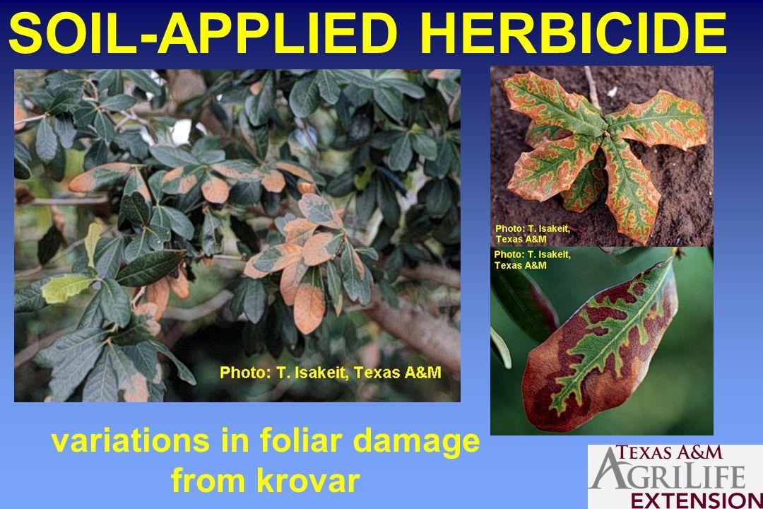SOIL-APPLIED HERBICIDE variations in foliar damage from krovar